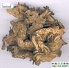 low price Black Cohosh extract powder
