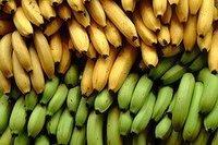 Banana from Bangladesh