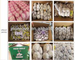 fresh white nuture garlic and fresh white garlic for sale
