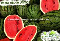 Kohenoor KIAS Hybrid Yellow Watermelon Seed