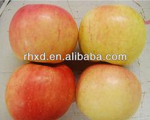 Chinese Fresh Gala Apple/fresh red gala apple for sale