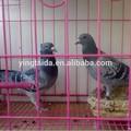 pigeon gaiolas de criação