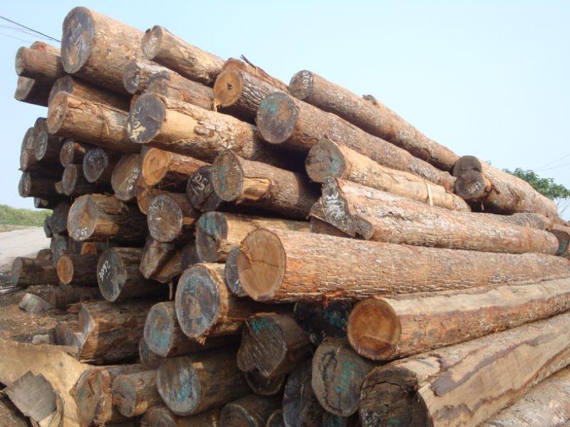 Tropical Wood Log