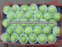 2013 fresh green gala apple