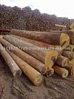 FSC Pure Eucalyptus grandis in green round debarked saw logs