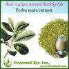 2013 High quality Yerba mate Extract powder 4:1/ 10:1/20:1