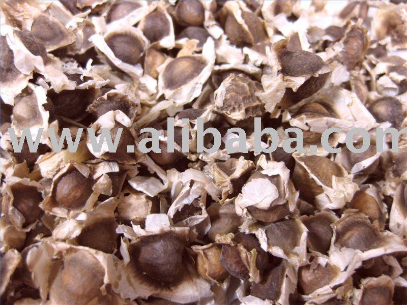Moringa semillas / deja polvo / Moringa camellia oleifera