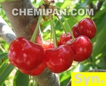 Cherry Fragrance Oil (100% Concentrated Synthetic Fragrance)