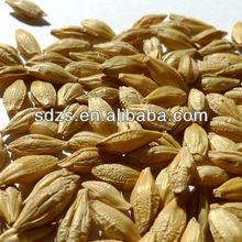 premium barley for beer price