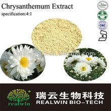 Instant Chrysanthemum powder/Chrysanthemum extract 4:1(Spray Dried)