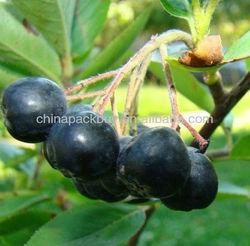 Acai Fruit powder/extract powder 4:1 10:1: acai berry