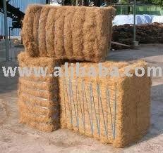 Oil Palm Fiber