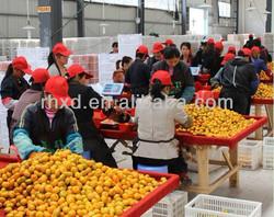 2013 new croped fresh fruit fresh citrus high quality factory farm manufacturer name all citrus fruits