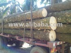 oil palm tree trunk/wood
