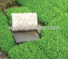 Green Rice Seeding Tray