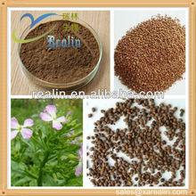 Herbal Extract Semen Raphani P.E./Radish Seed Extract
