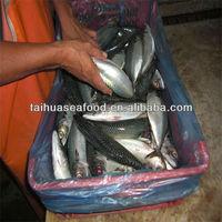 frozen fresh sea fish/seafood