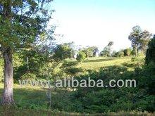 Agriculture Land, high rainfall tropical farm land.