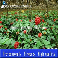 High Quality and Hot Sale Radix Notoginseng P.E. Notoginseng triterpenes 60%