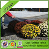 2013 Woven Ground Cover Landscape Fabric Weed Control