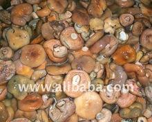 Blanched Lactarius Deliciosus