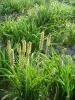 No. 1 quality Coriander Seeds ( Indo-Us-Divyashtra )