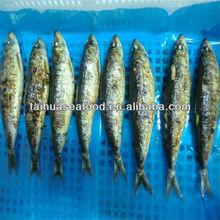 super market selling wholesale fresh fish