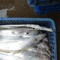 melhor frutosdomar nomes dos peixes do oceano