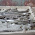 fresco congelado frutosdomar nomes dos peixes do oceano