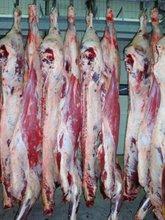 half-carcases, meat, pork, beef, horsemeat,