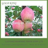 2014 China Yantai New Crop Ripe Juicy Fresh Fuji Apples