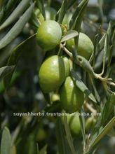 Olive Oil basic oil (bulk)