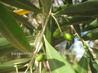 Industrial Olive Oil Wholesalers