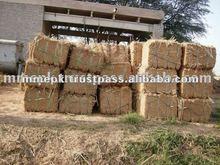 Pakistan Grade A Wheat Hay Bales