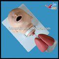 Iso säugling intubation ausbildungsmodell, Atemwege modell