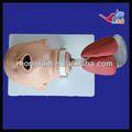 Iso säugling intubation ausbildungsmodell, erwachsene intubation modell