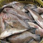best season and frozen catfish exporters