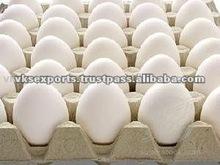 Granja huevos frescos
