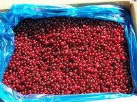Wild Berries Fresh Frozen Lingonberries