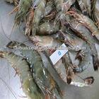 frozen shrimp risotto