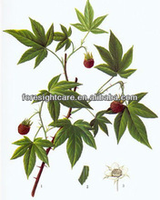 Raspberry Seeds Essential Oil high purity 100% natural