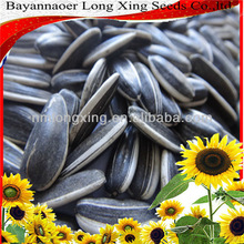Chinese sunflower seed long type with competitive price