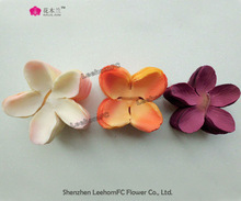 fresh five flower petal with many colors