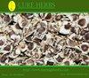 Indian Moringa PKM1 Hybrid Seeds