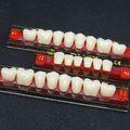 Los dientes falsos/dental tres- capas synthctic colores dientes de resina
