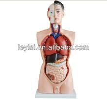 85CM Male torso model ( 19 parts),Human anatomical model medical teaching