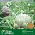 Extraits naturels cynarin artichaut extrait