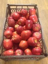Fresh Starking Apple