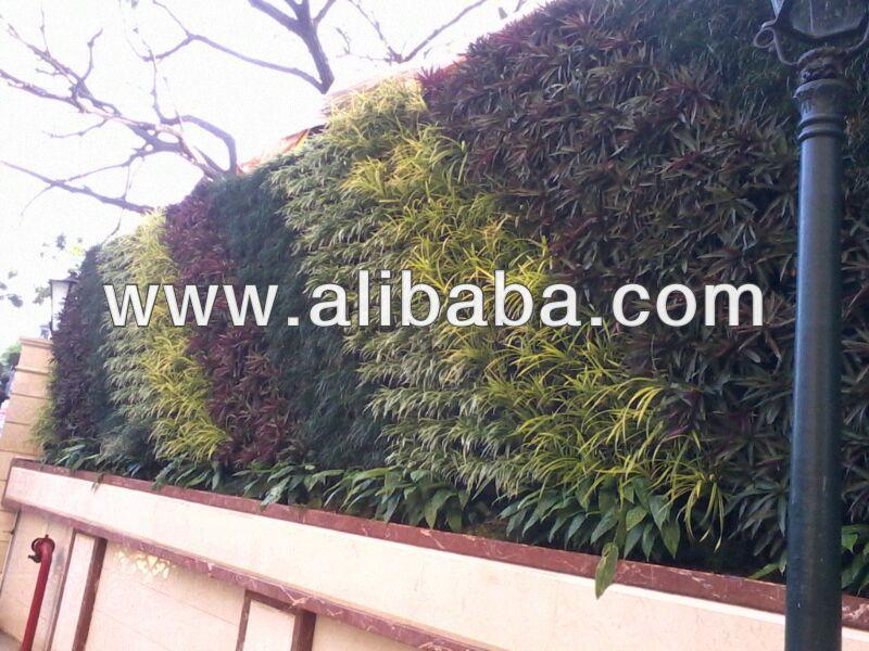 anao de jardim resumo:plantas ornamentais e muro de jardim-Plantas arborizados-ID do produto