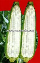 2015 venta caliente sy-w102 glutinoso híbrido semillas de maíz